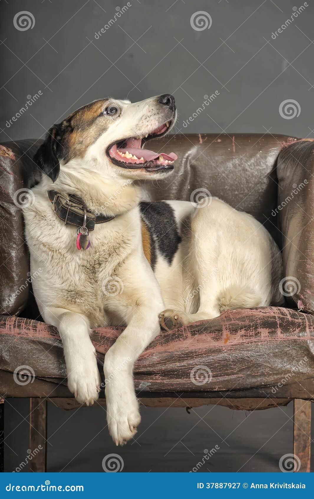 Mollige hond