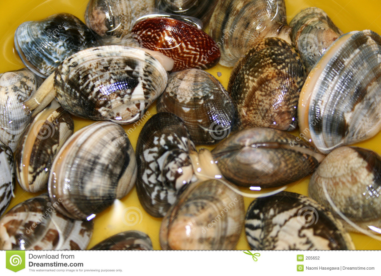 Mollusco a collo corto