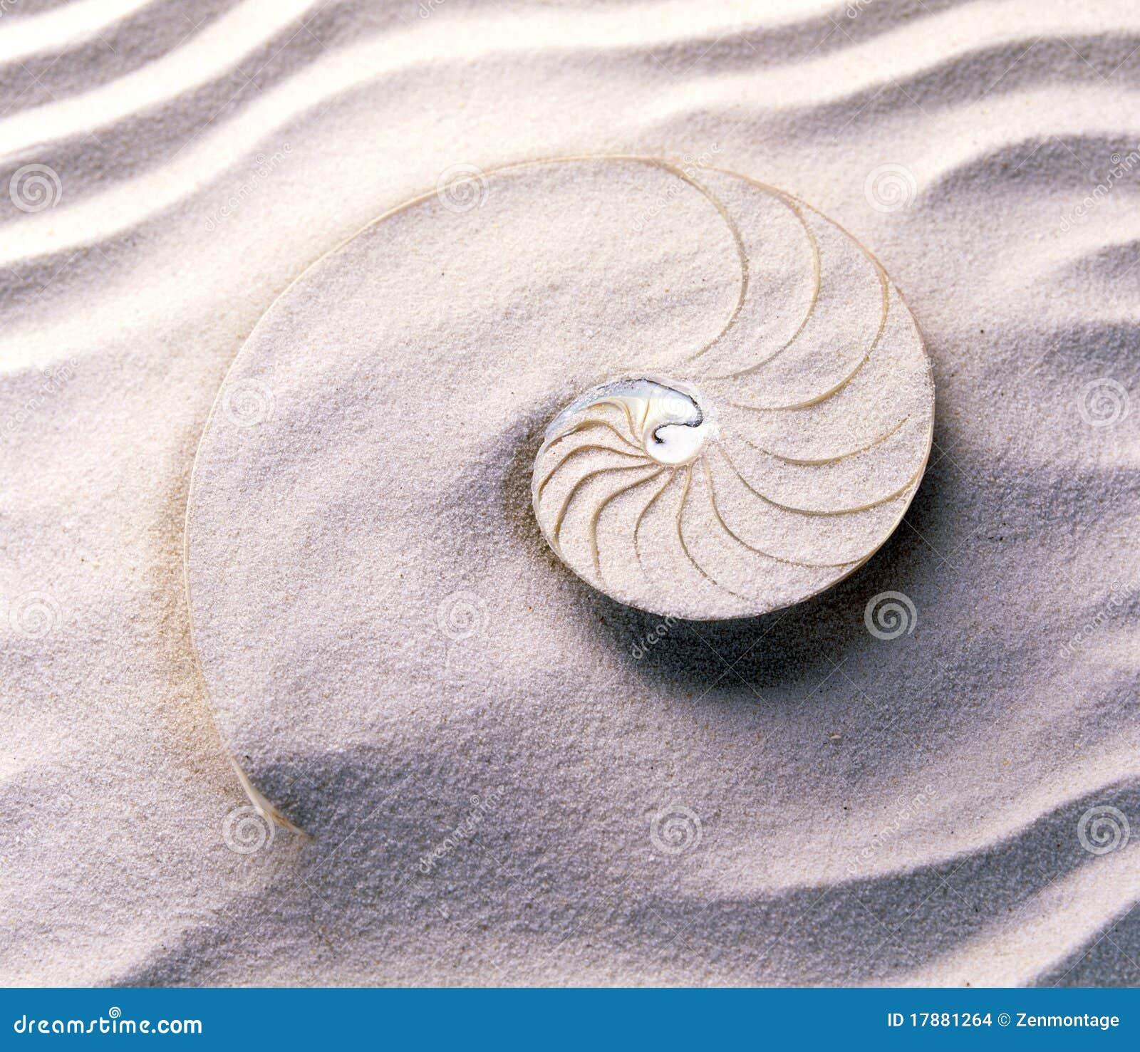 Mollusk przecinająca sekcja