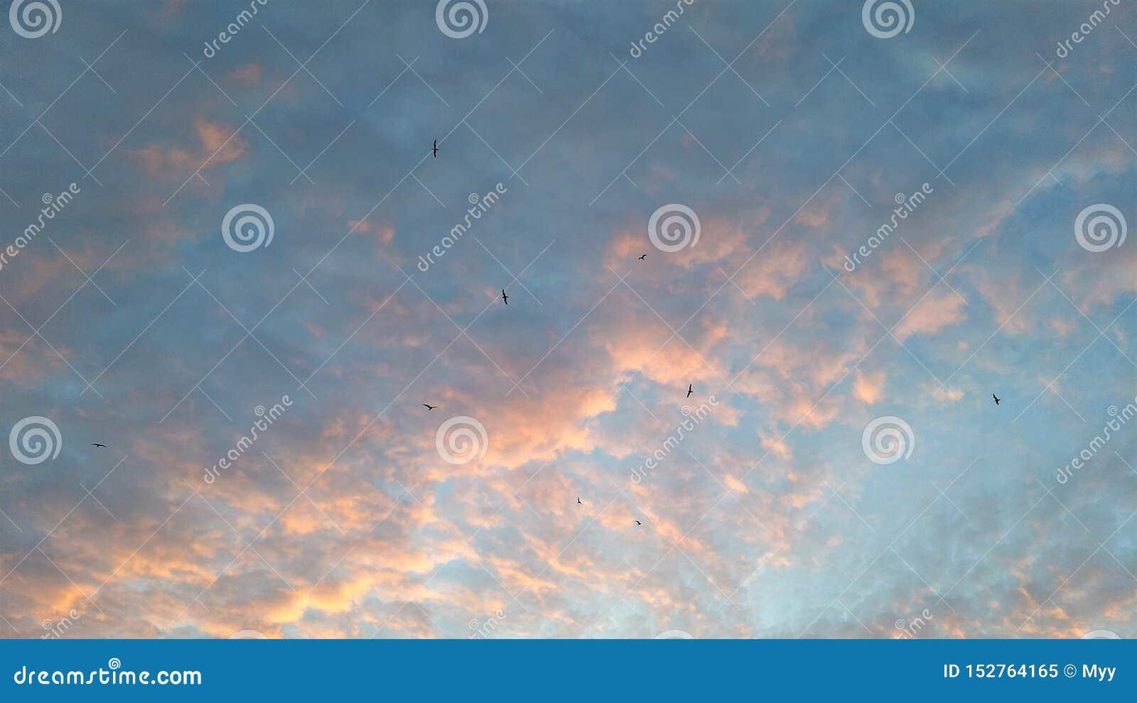 Moln i färger av ljusblått och rosa, fågelkonturer på himlen