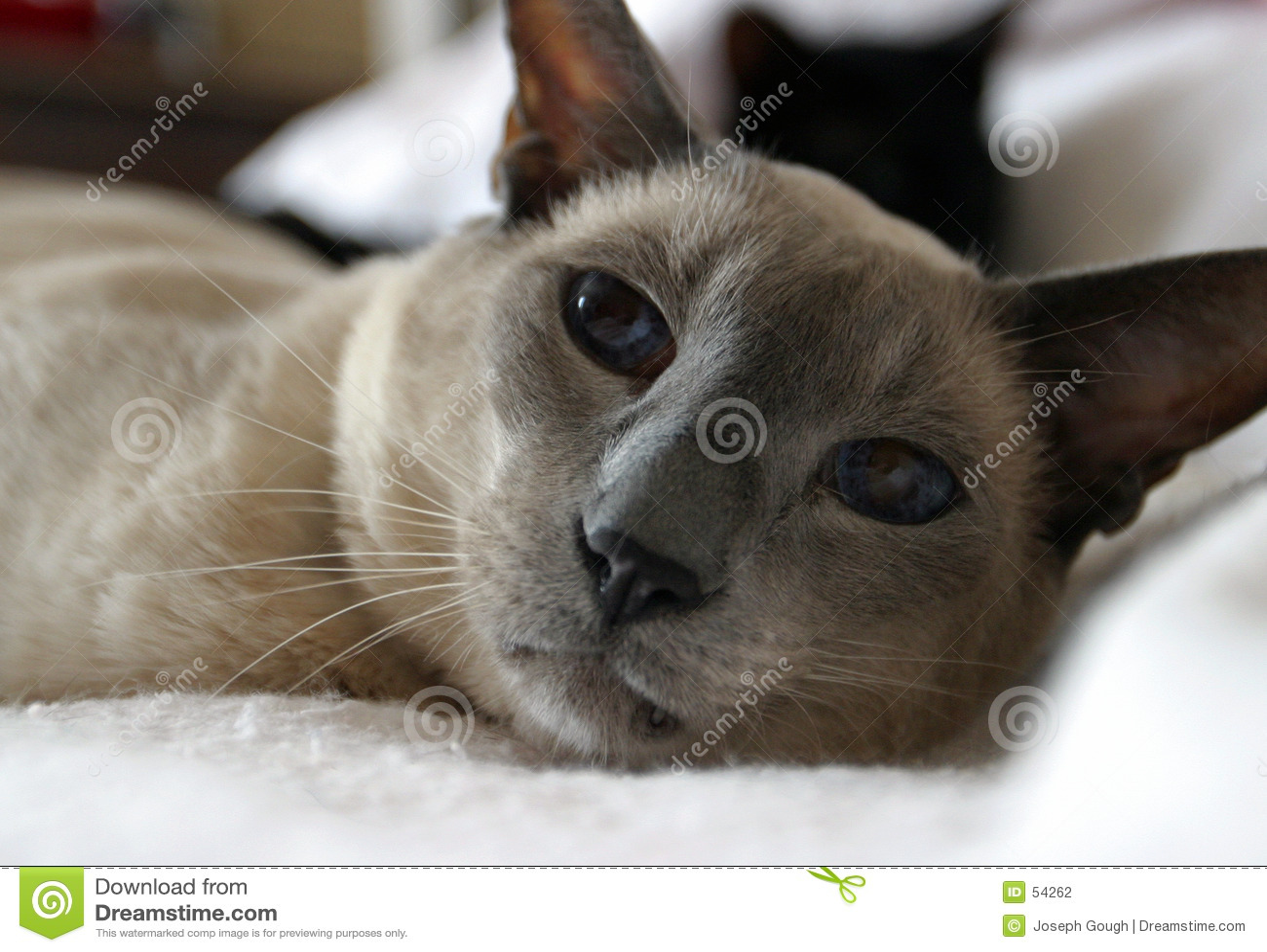 Download Molson (orientation Fortement Sélectrice Sur Des Yeux) Photo stock - Image du frown, bleu: 54262