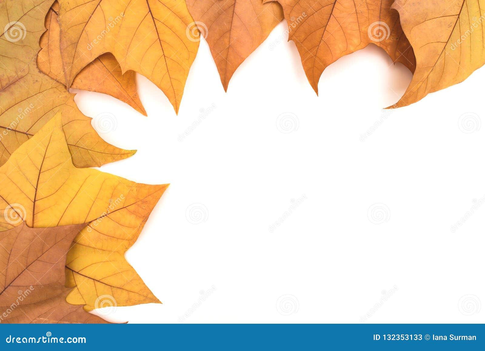 Molte foglie di autunno su un fondo leggero