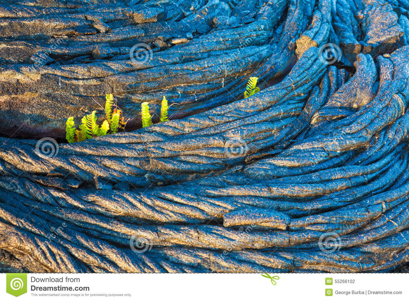 Molten Cooled Lava And Green Fern Stock Photo - Image of beauty ...