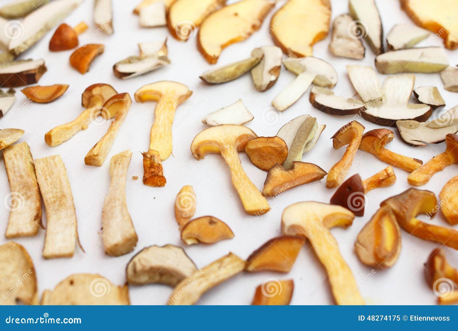 Molti generi di funghi della foresta