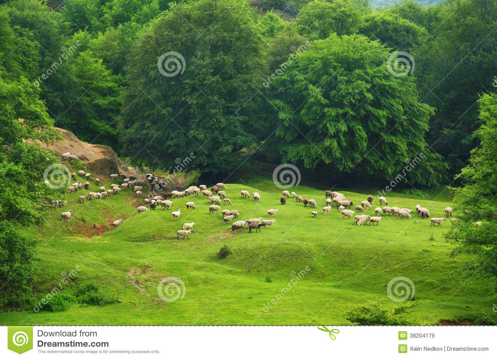 Moltitudine di pecore