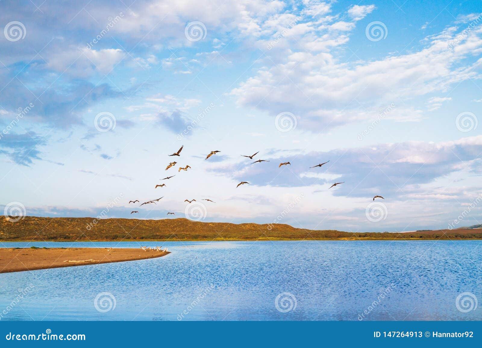 Moltitudine di pellicani e di bello cielo nuvoloso