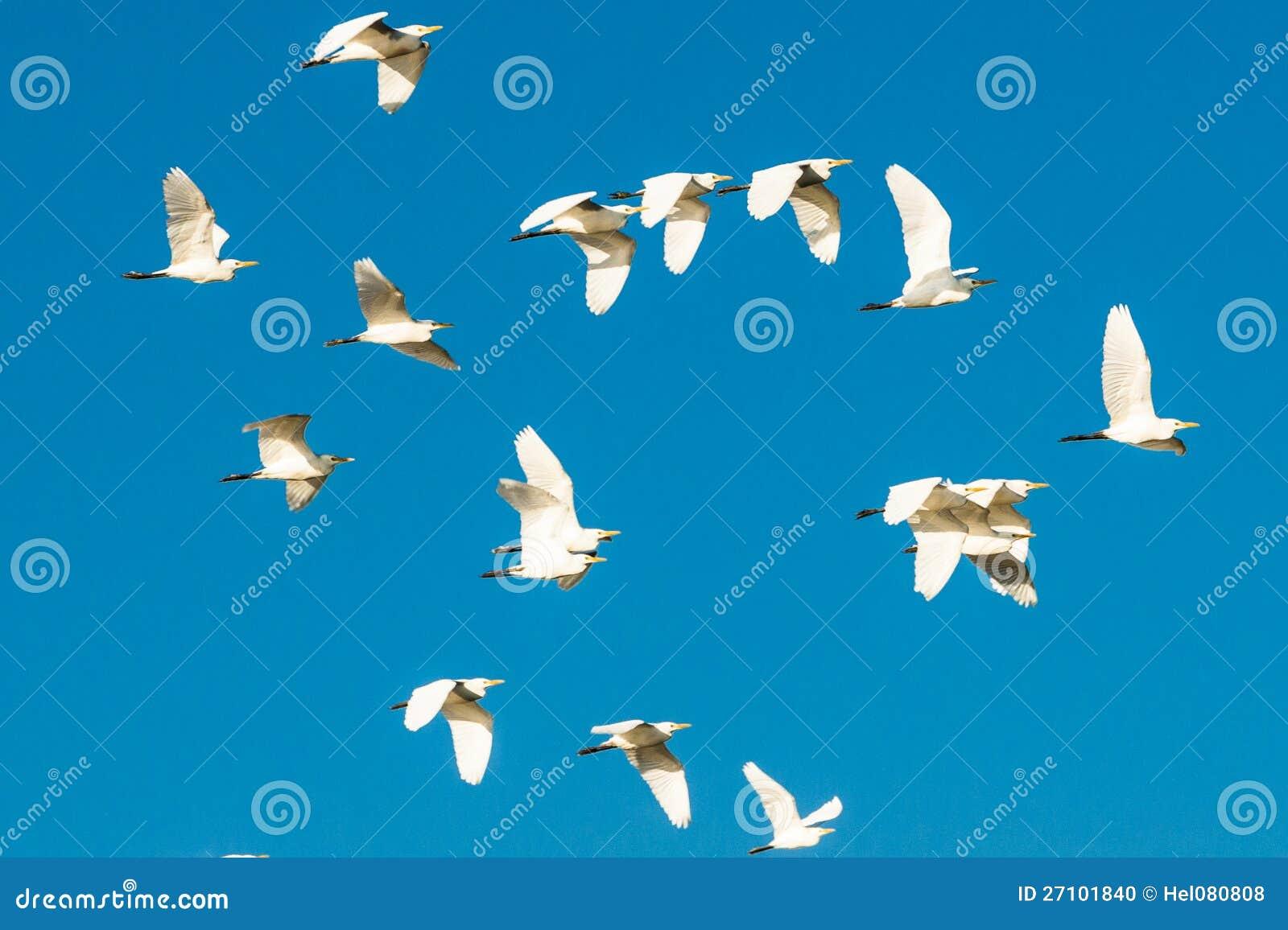 Moltitudine di uccelli nel cielo blu
