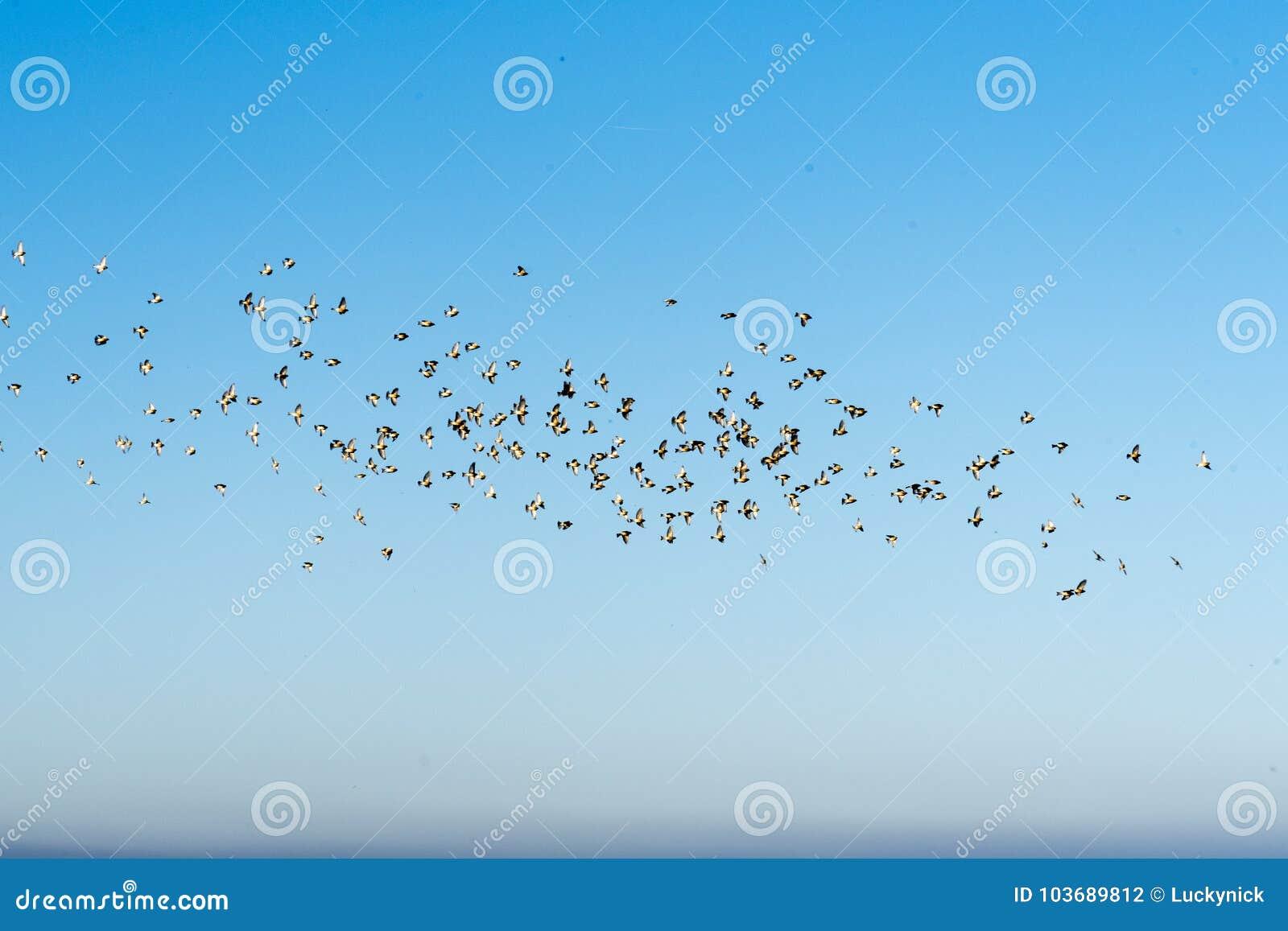 Moltitudine di uccelli su un cielo blu