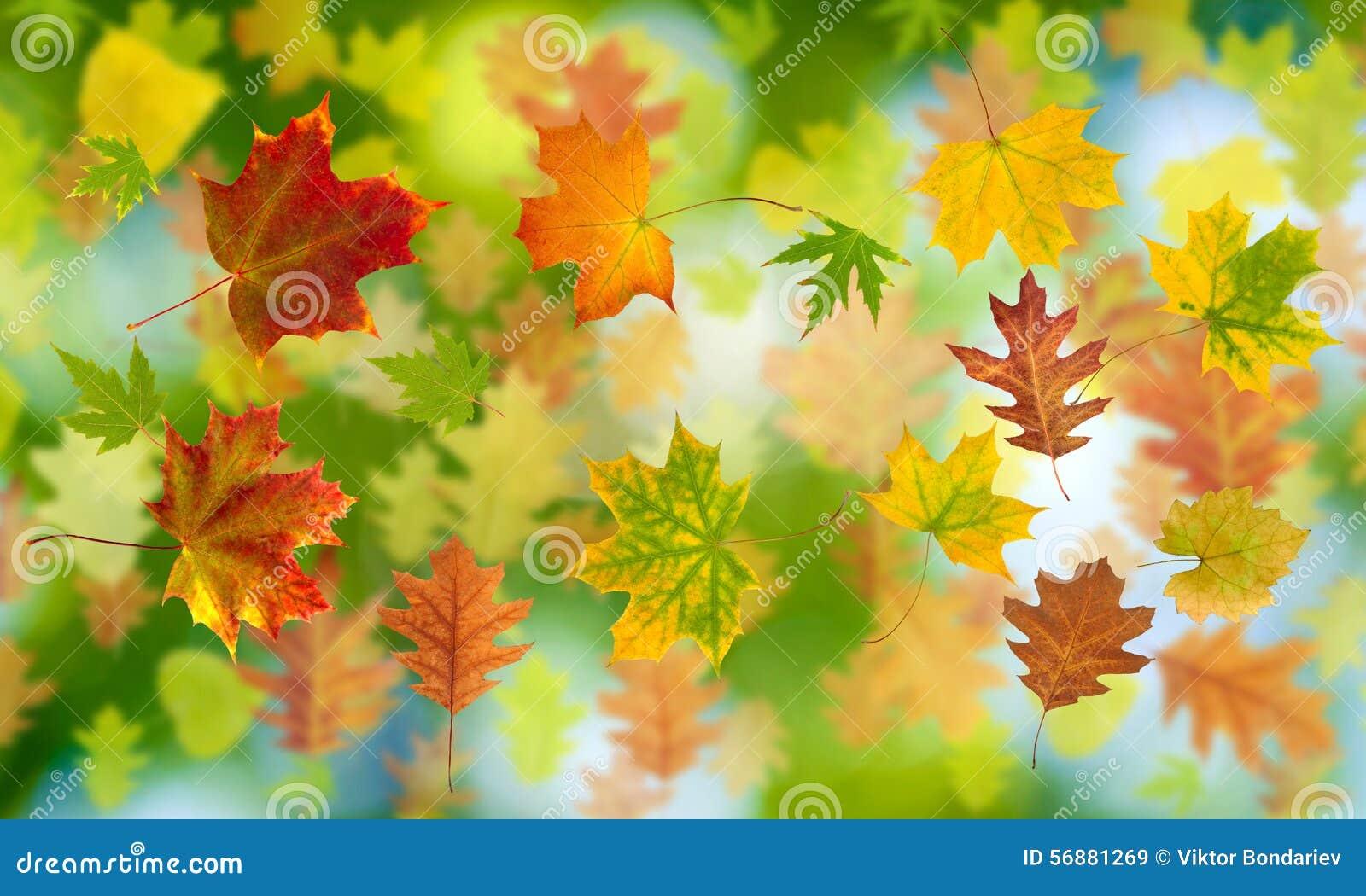 Molto foglia di autunno su un primo piano verde del fondo