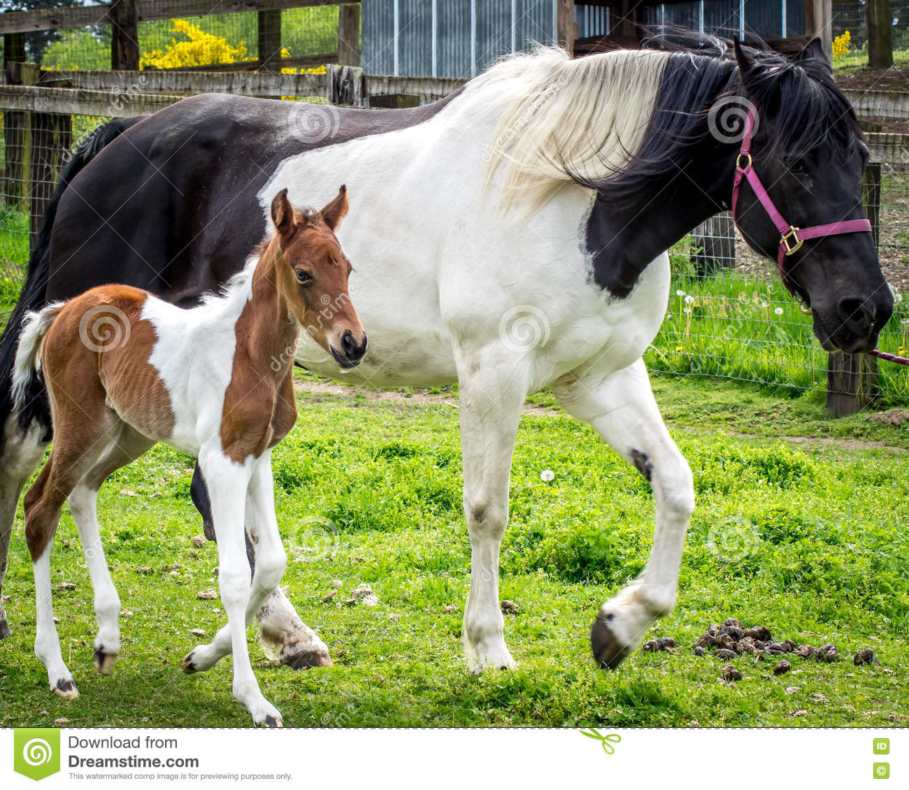 735 Mom Baby Horse Photos Free Royalty Free Stock Photos From Dreamstime