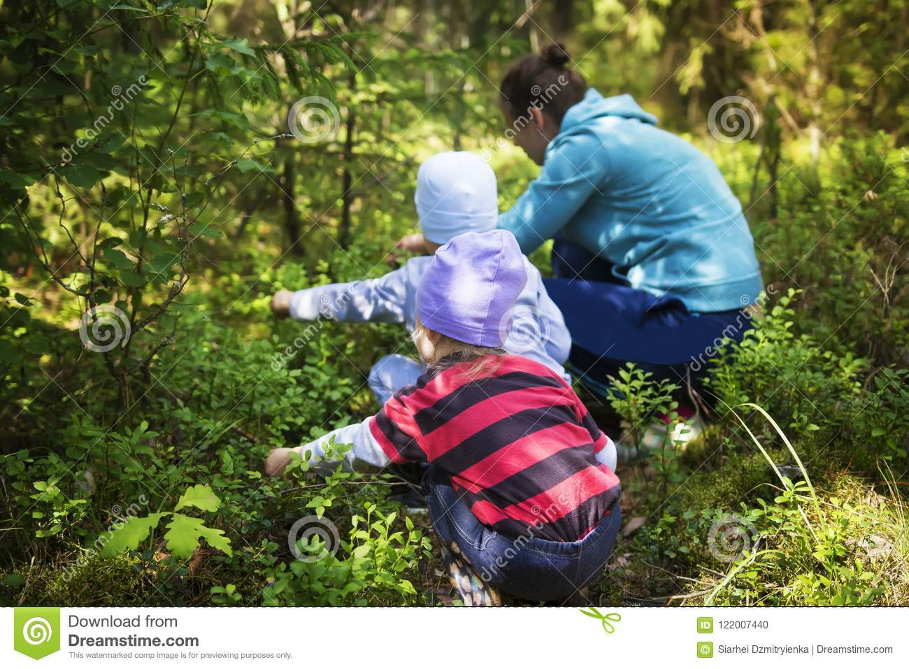 Mom and children take blueberries in a green summer forest on a bright sunny day. The family gathers berries in the forest