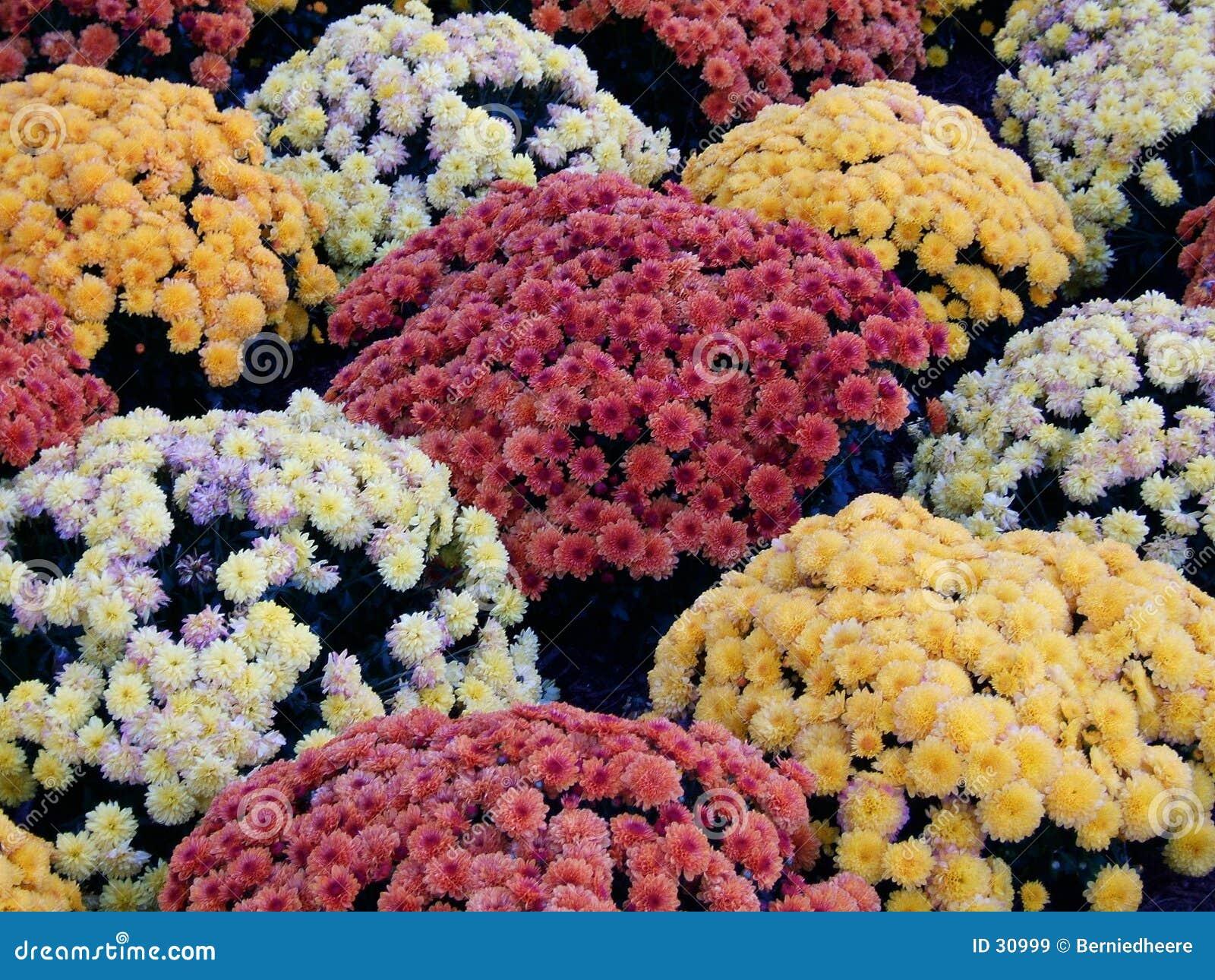 Download Momias imagen de archivo. Imagen de colores, agrícola, hermoso - 30999