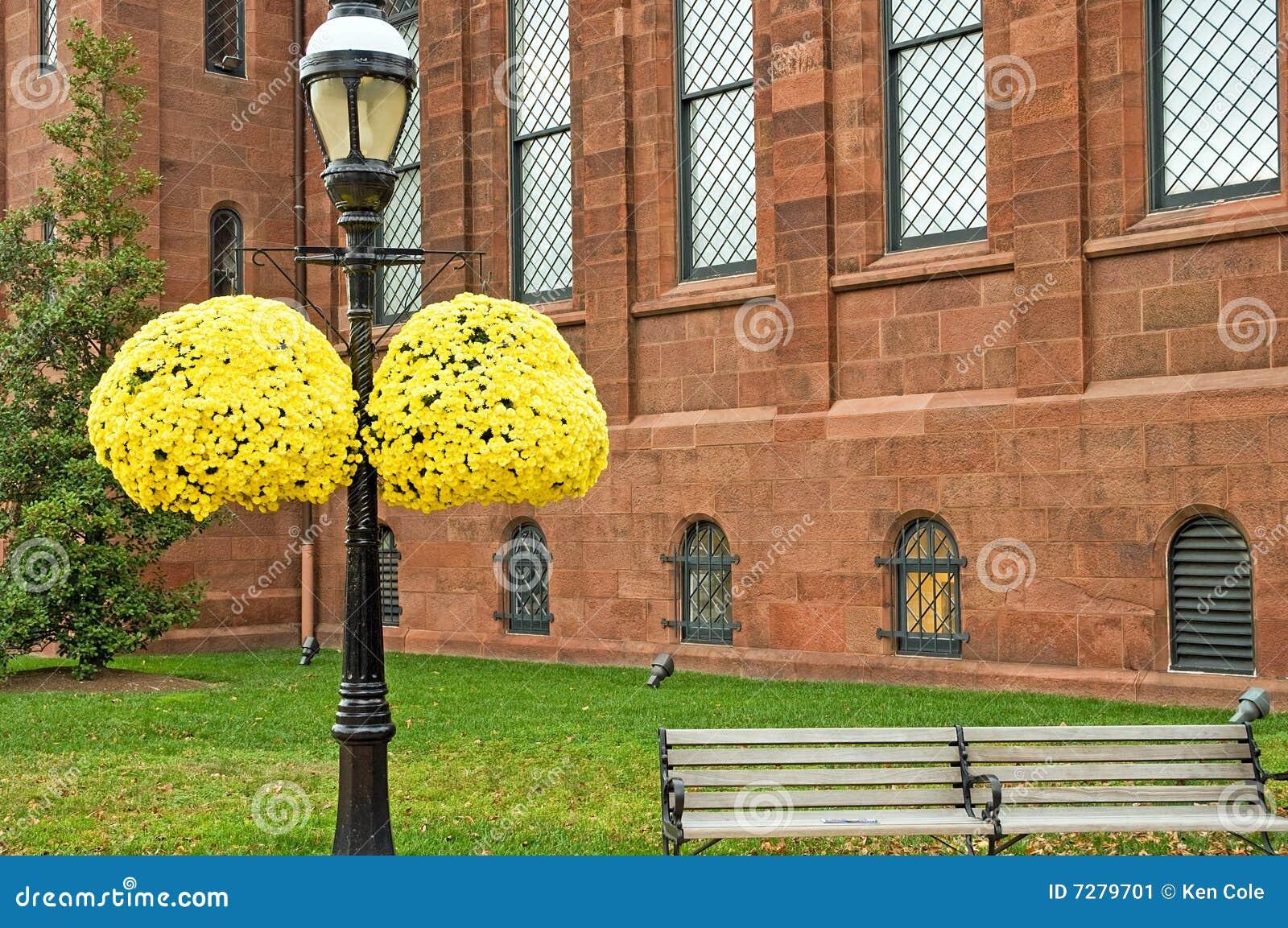 Momias colgantes amarillas