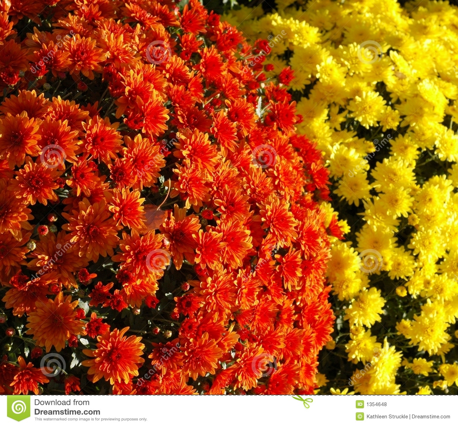Momies oranges et jaunes