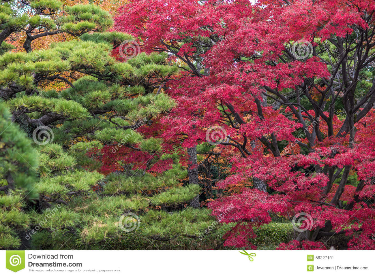 Momiji season in Japan, autumn leaves, very shallow focus