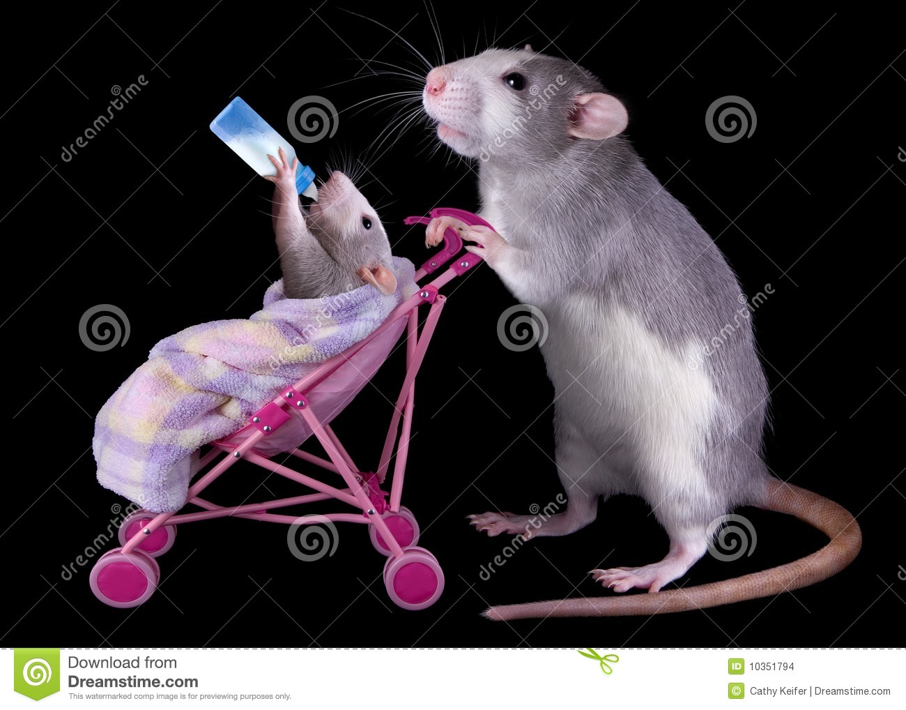 ... her baby in a stroller while the baby is drinking milk from a bottle