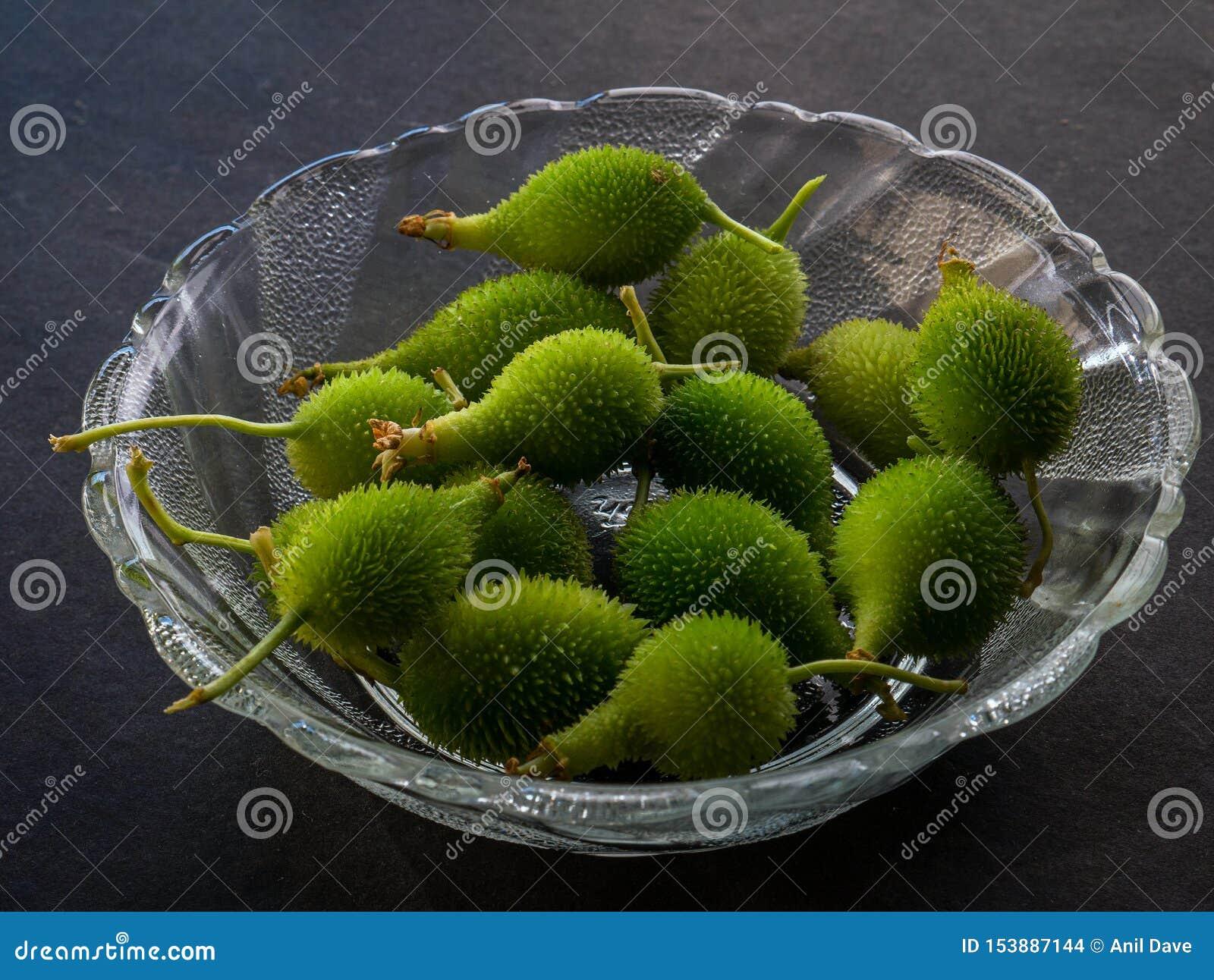 Momordicadioica eller tropisk grönsak Kalyan för kakoda nära den mumbai maharashtraen Indien