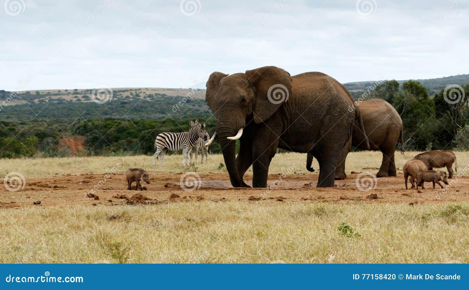 Mon de l eau éléphant de Bush d Africain encore