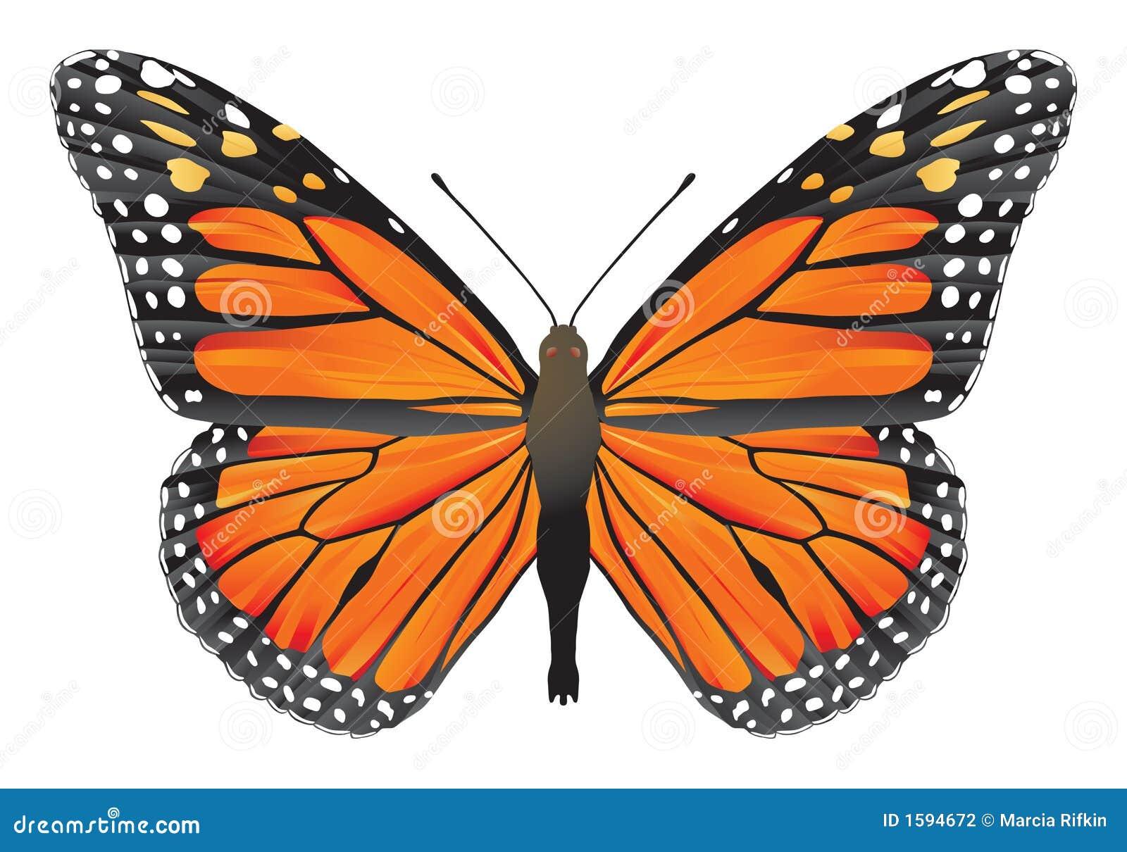 Tala ilegal de 19 hectáreas en la reserva de la mariposa monarca