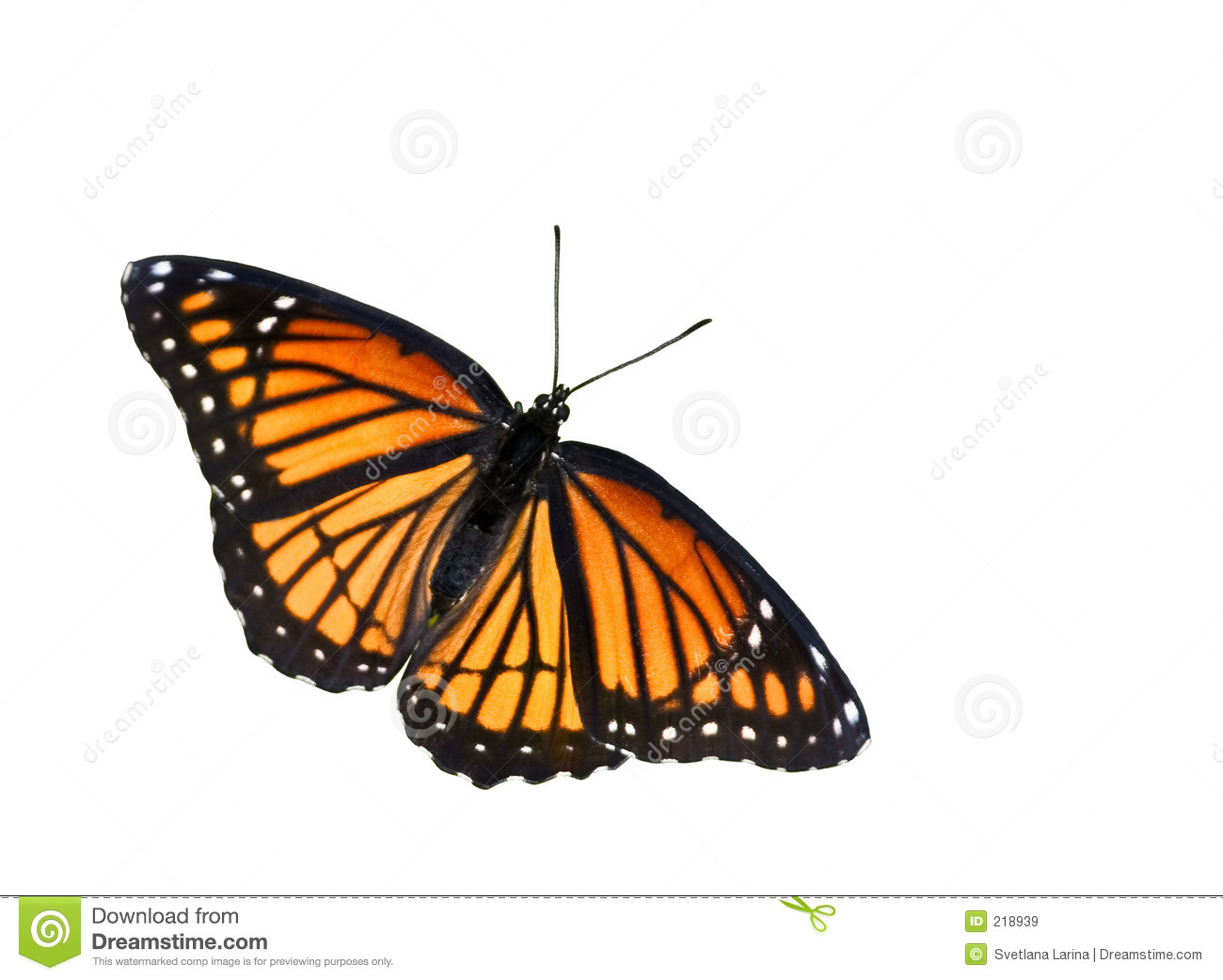 100 Monarch Design The Monarch Modernspaces Nyc  : monarch butterfly 218939 from 45.76.23.192 size 1300 x 1042 jpeg 196kB
