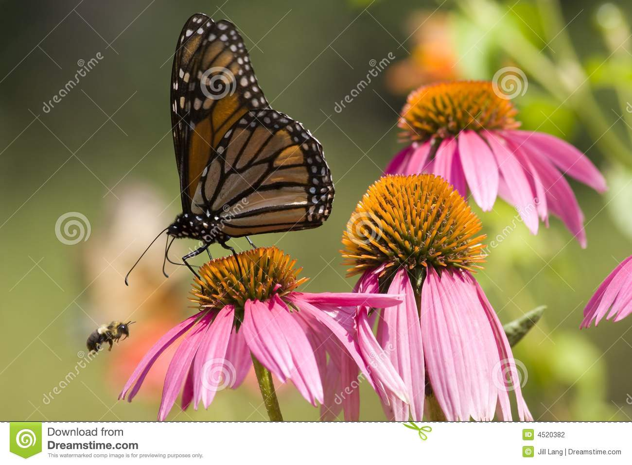 Monarch Butterfly and Bee