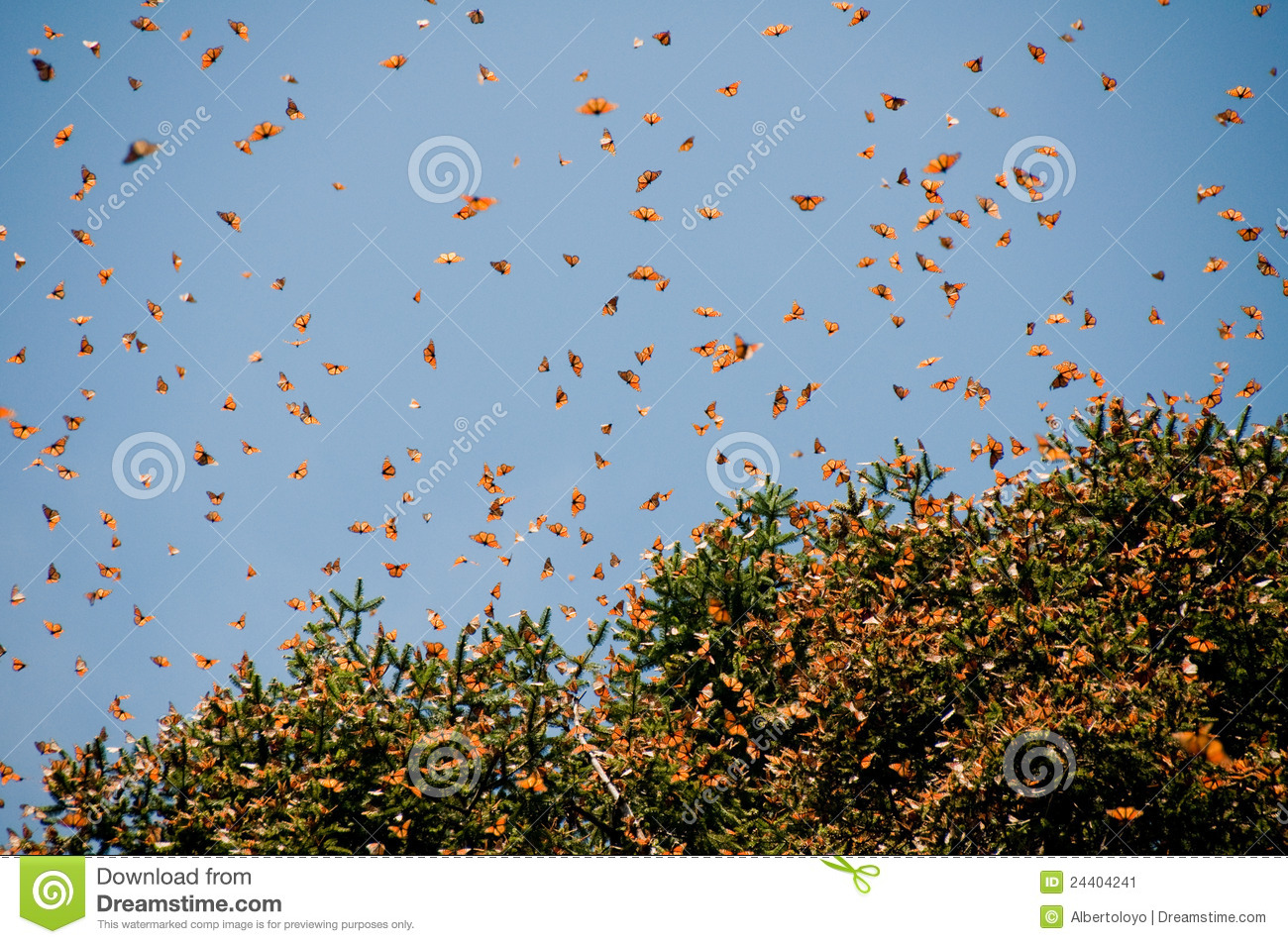 Monarch Butterfly Biosphere Reserve, Mexico