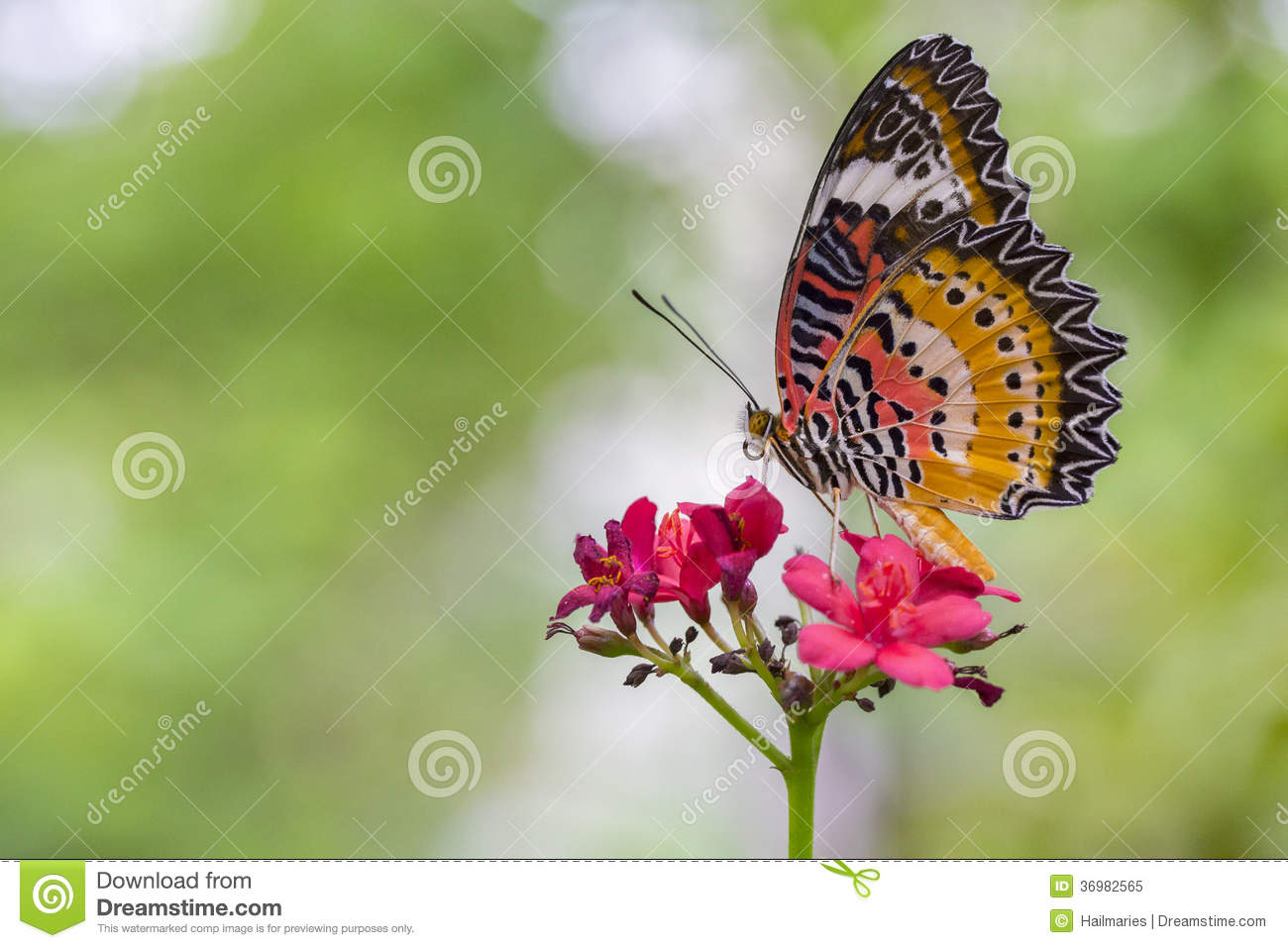 Monarch Butterfly Royalty Free Stock Photo Image 36982565