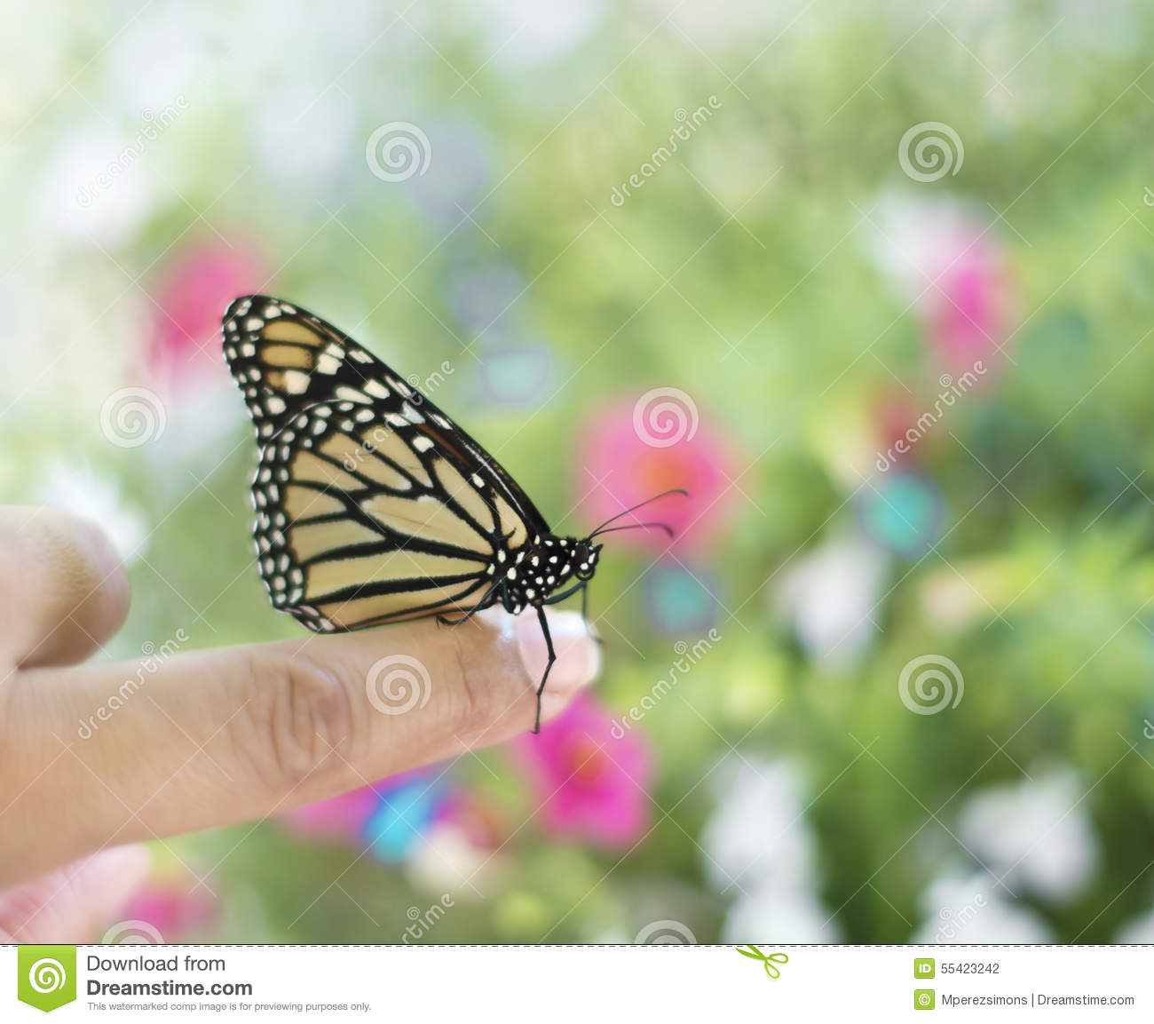 e666085f3 Monarch Butterfly On A Finger Stock Photo - Image of human, green ...