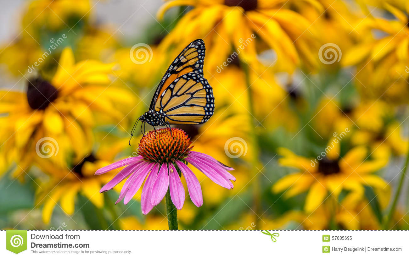 Group Of Yellow Monarch Butterfly In The Forest. Stock Photo ...