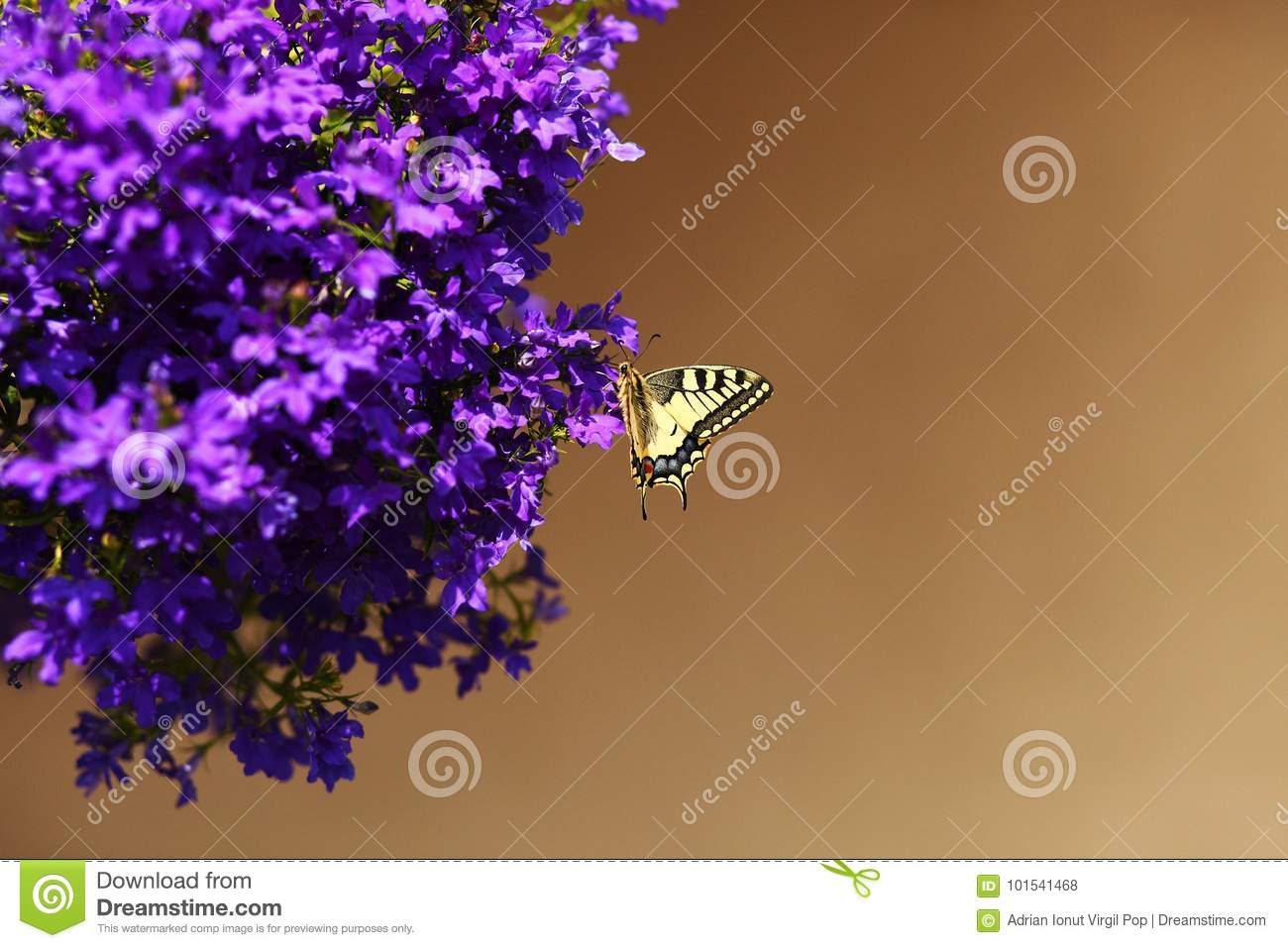 Monarch Butterfly Resting On Blue Flowers Stock Photo