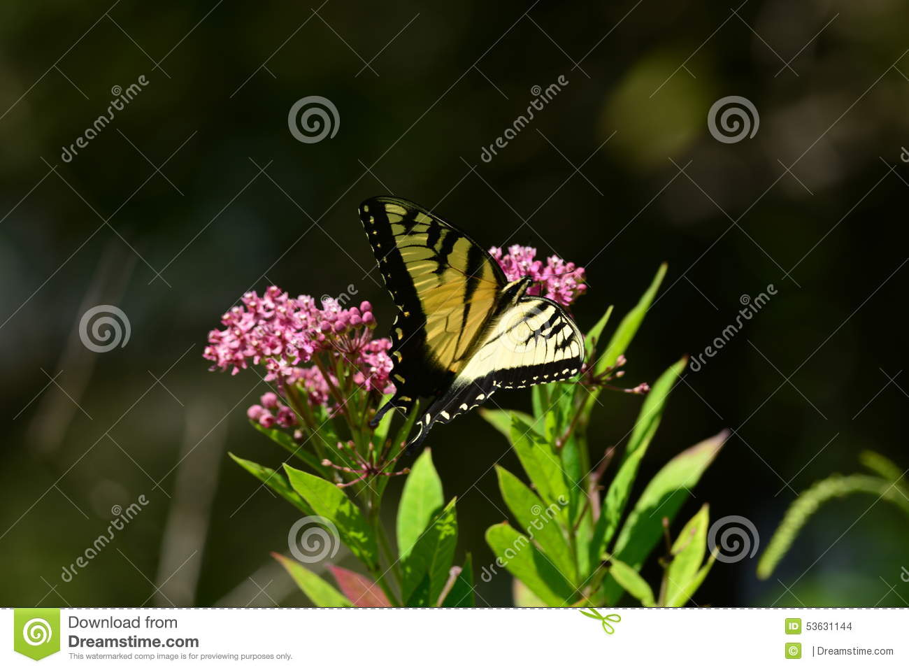 Monarch Butterfly Resting On Flower Stock Photo