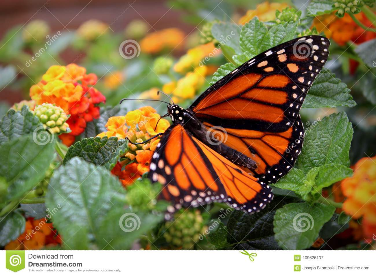 Monarch Butterfly with Flowers