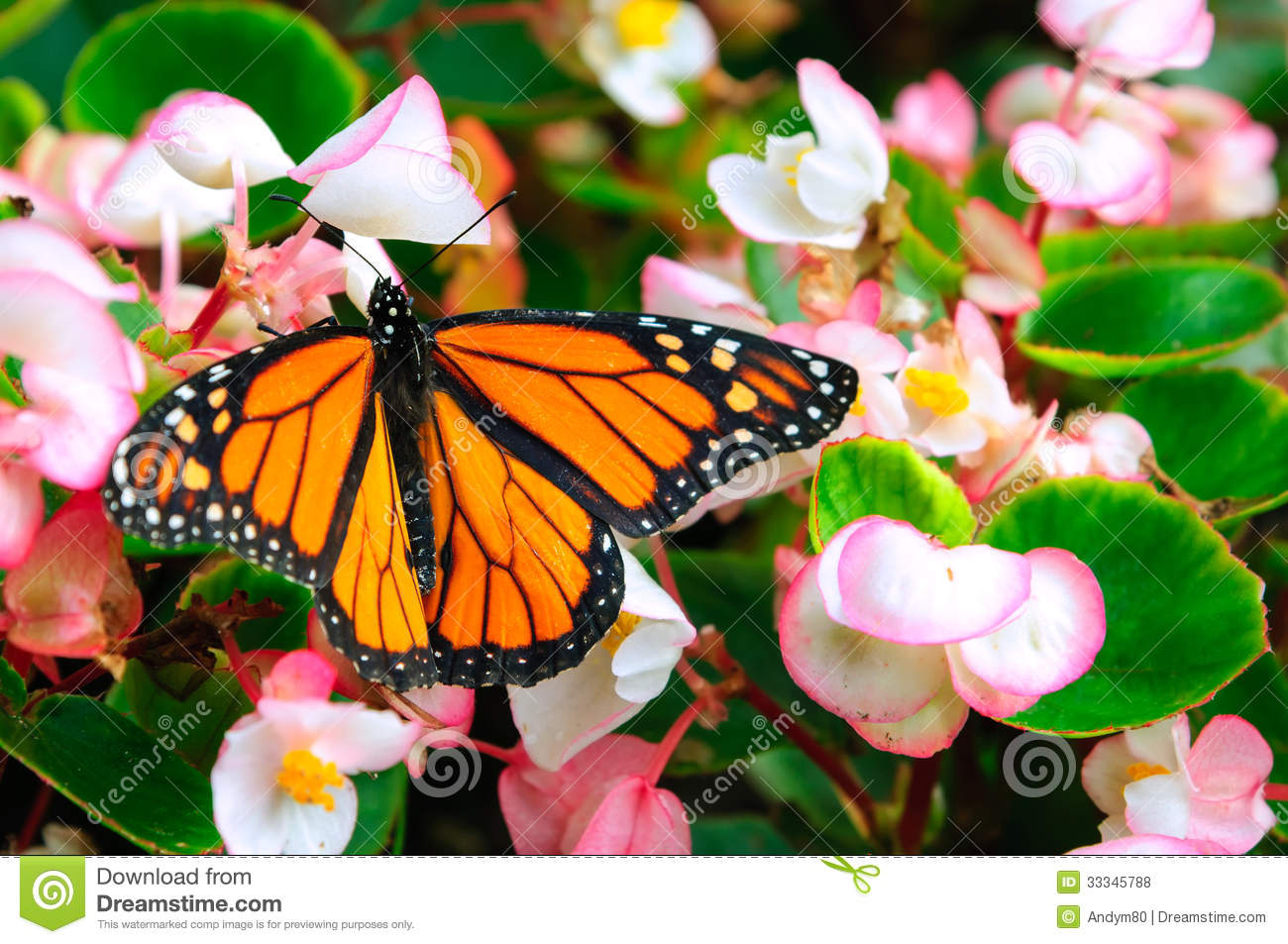 Monarch butterfly sitting on the flower