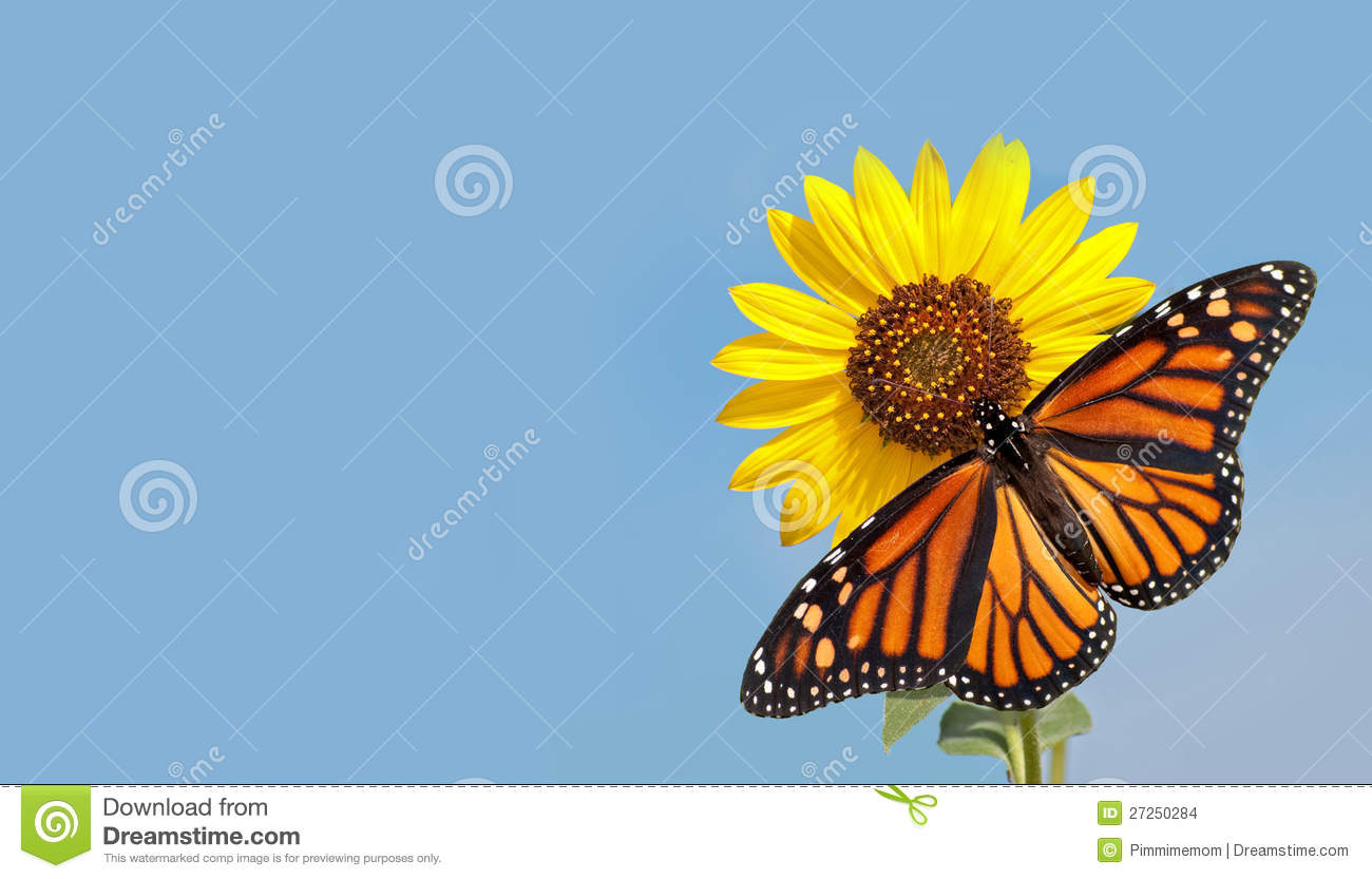 Monarch Butterfly On Sunflower Against Blue Sky Stock ...