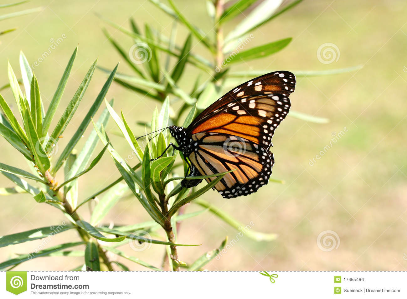 Millions Animals Forest Yellow Butterfly Monarch Butterflies ...