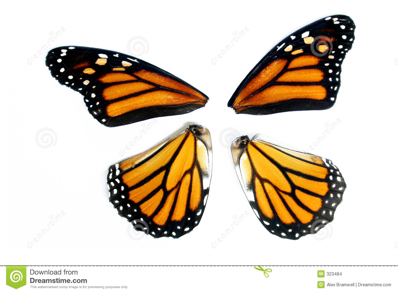 Monarch Butterfly Wings Stock Photo. Image Of Butterfly ...