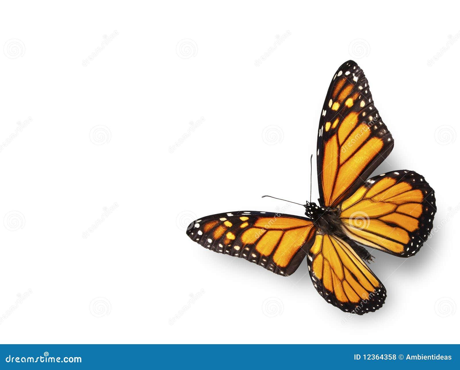 Monark för fjärilshörnflyg