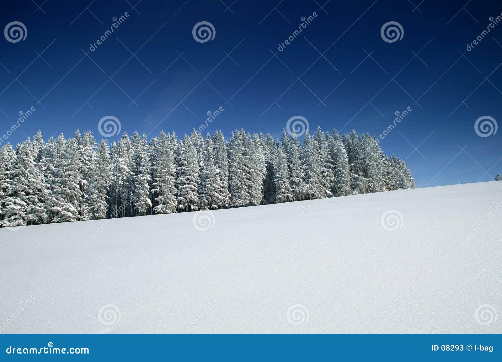Monde de merveille de l hiver