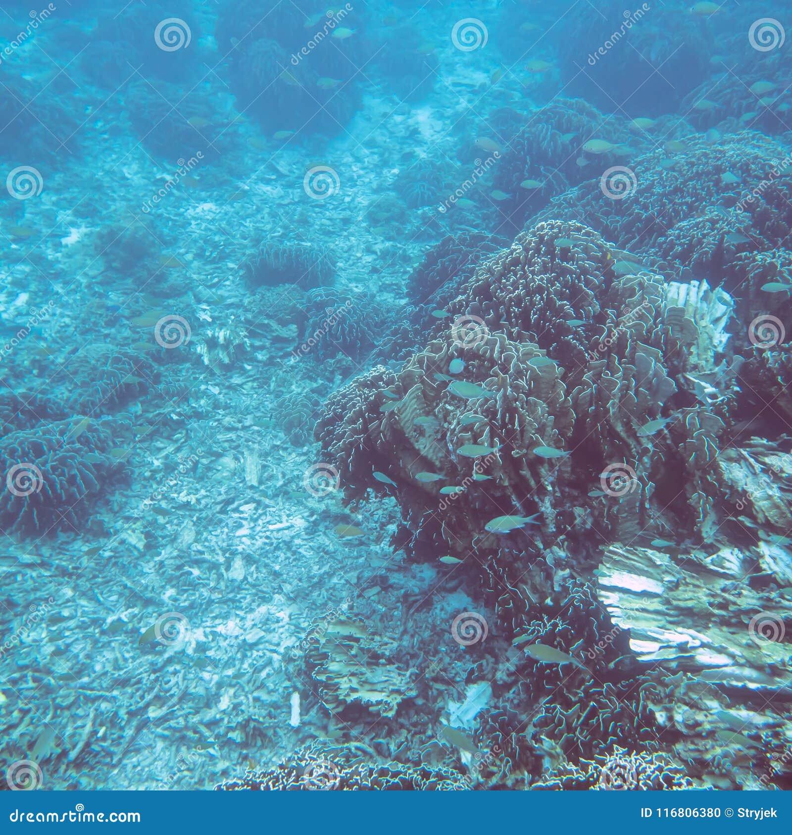 Mondo subacqueo tropicale