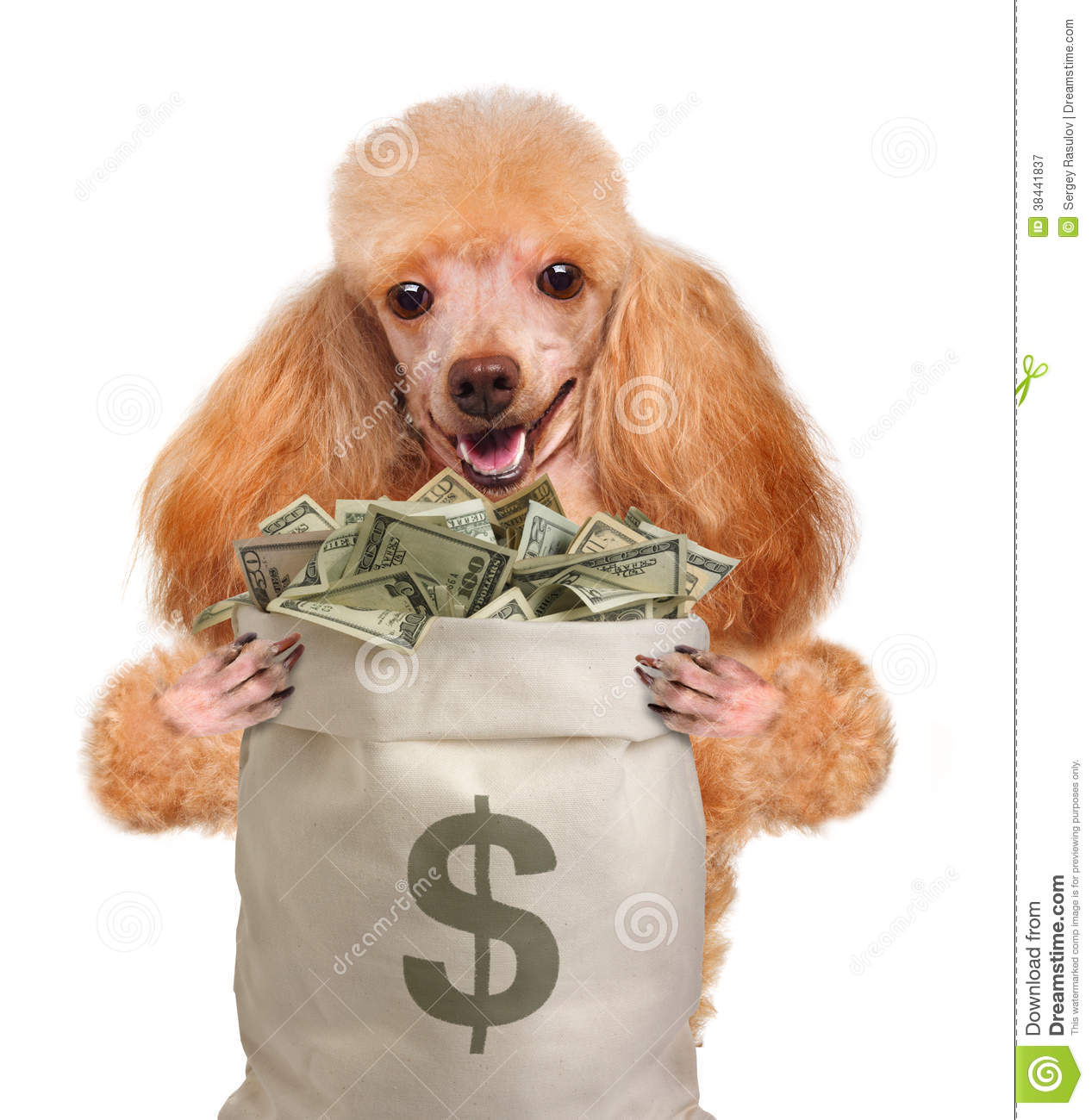 Money Dog Holding. Royalty Free Stock Photography - Image: 38441837