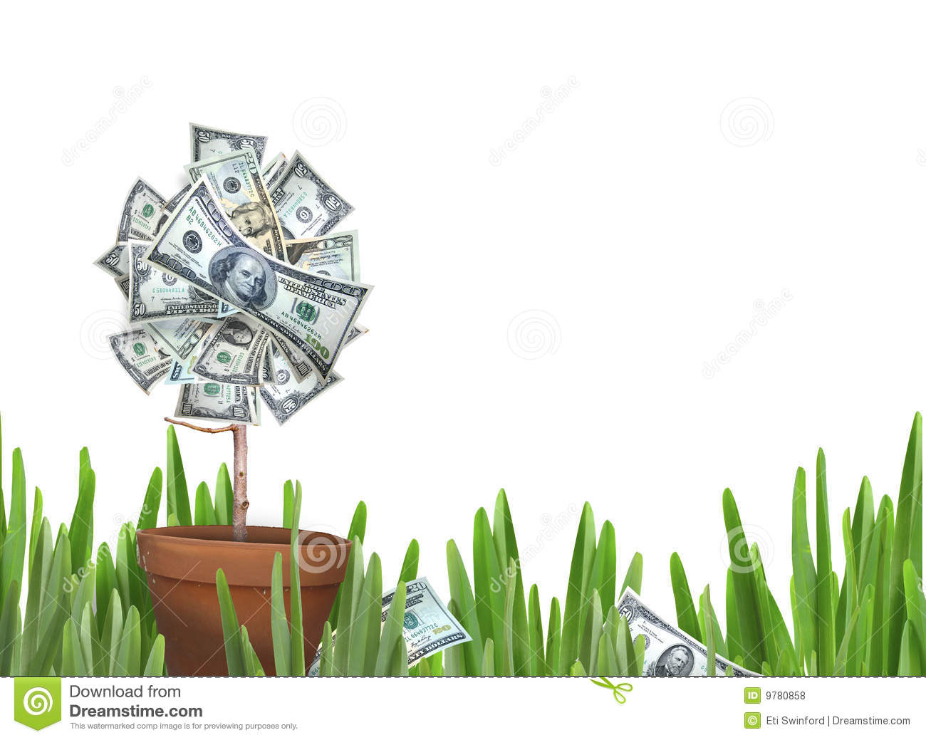 Money flower stock photo  Image of financial, growth, plant