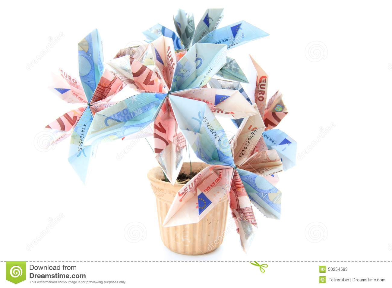 Money Flower In A Pot Stock Image Image Of Nature Green 50254593