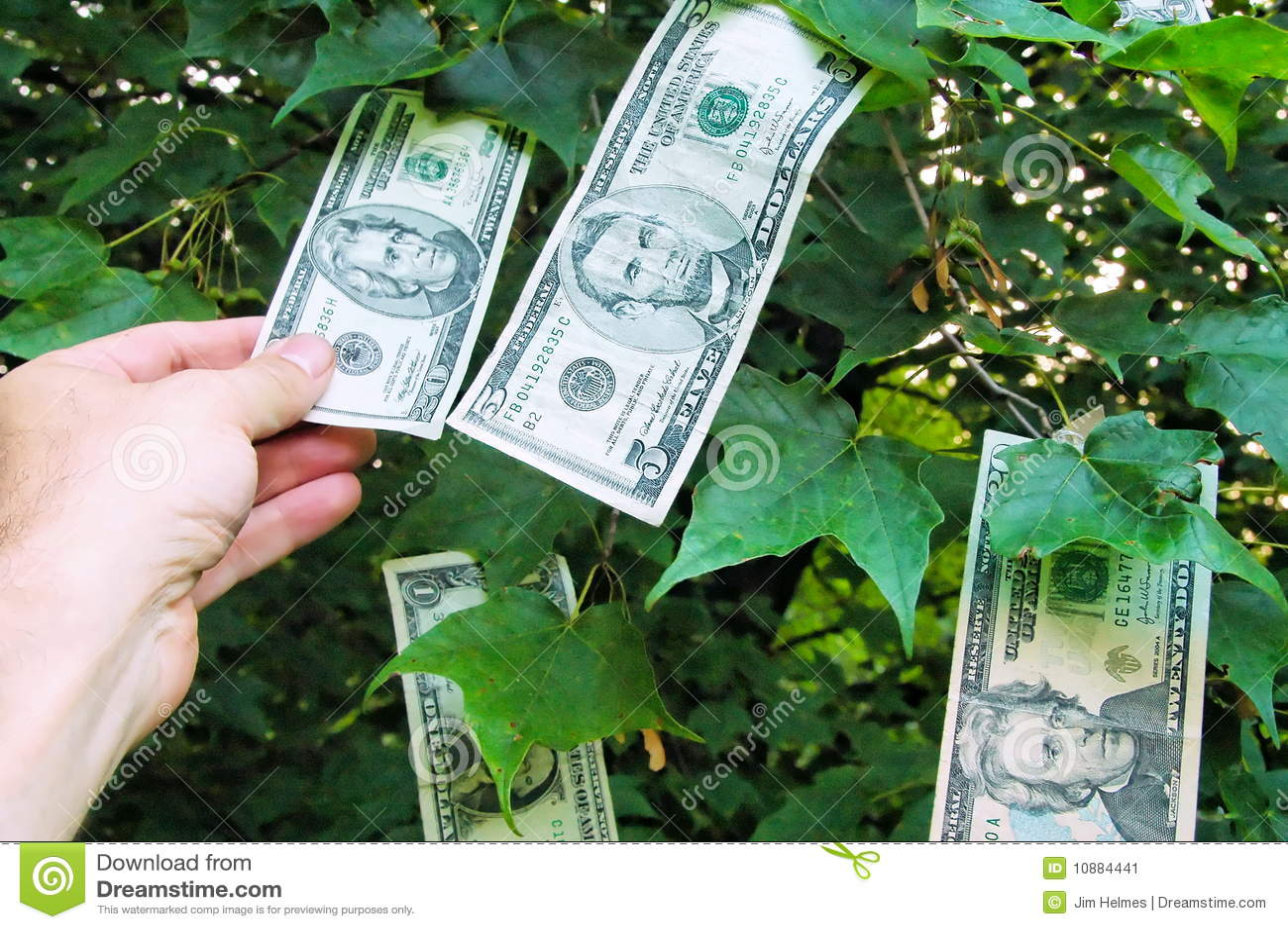 Money Plant Quotes