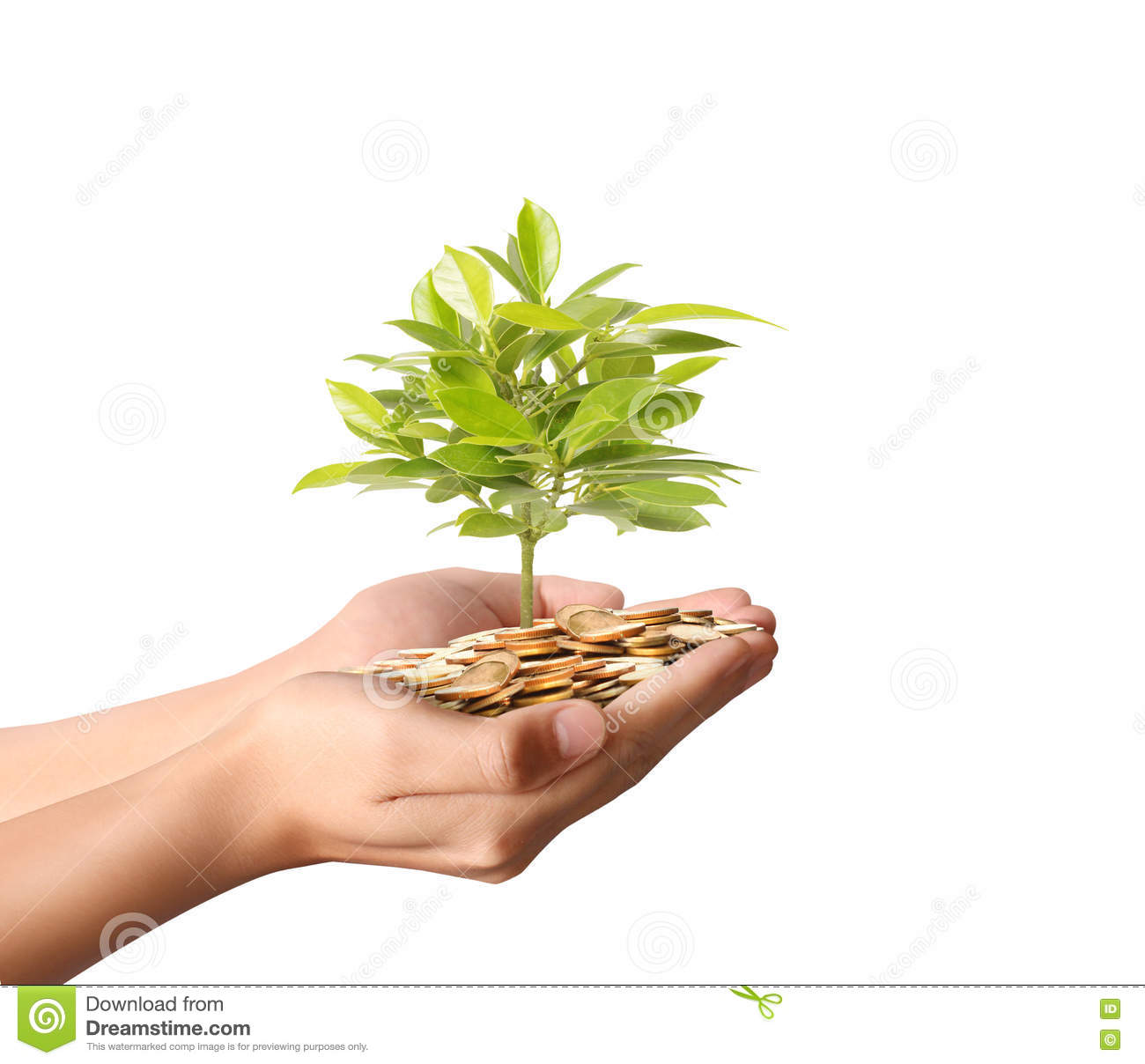 Money plant growing from coins in hand stock photo image 68774015 - Successful flower growing business ...