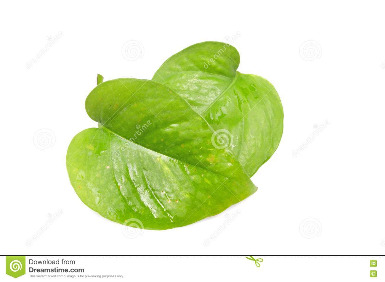 Money Plant Leaves Stock Photos Image 13760223