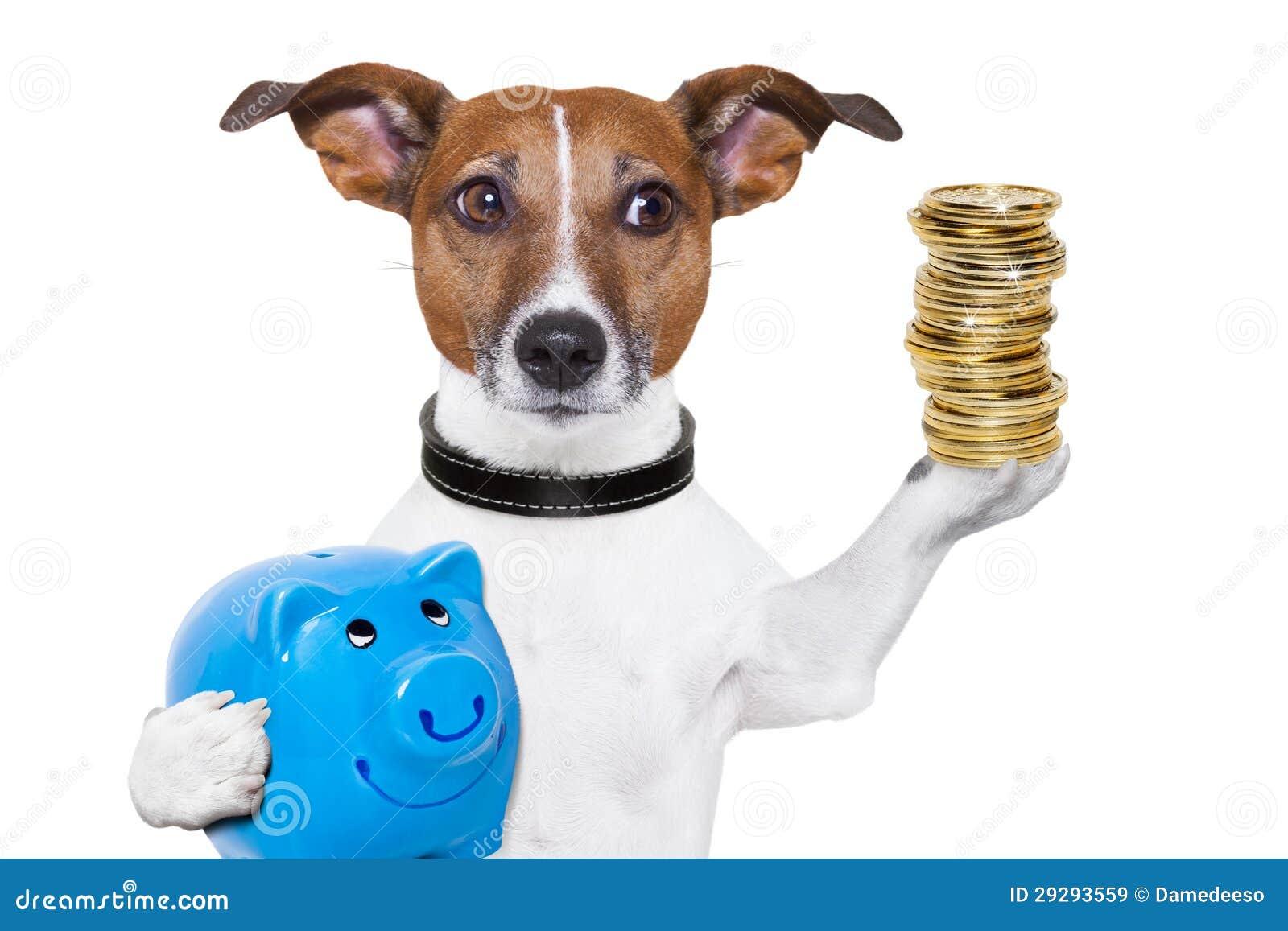Dog Piggy Bank Video