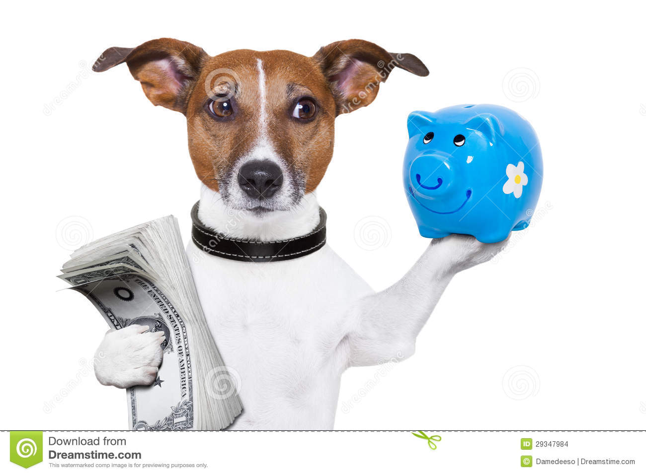 Earn Money For Walking With Dog