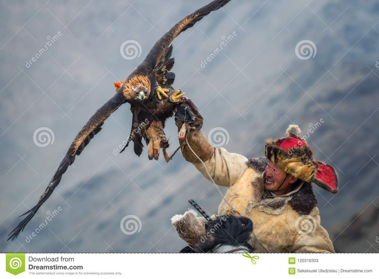 Download Mongolia, Golden Eagle Festival.Hunter On Horse With A Magnificent Golden Eagle, Spreading His Wings And Holding Its Prey. Editorial Stock Photo - Image of kind, festival: 120316303