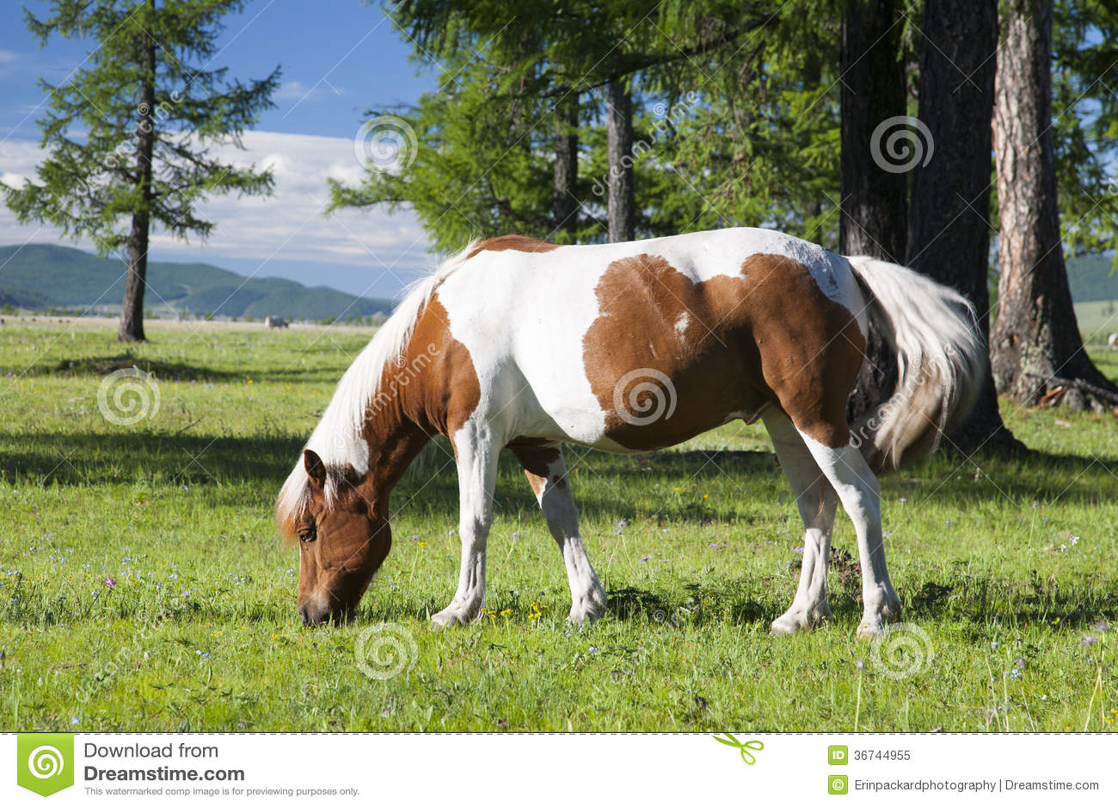 Mongools Paard
