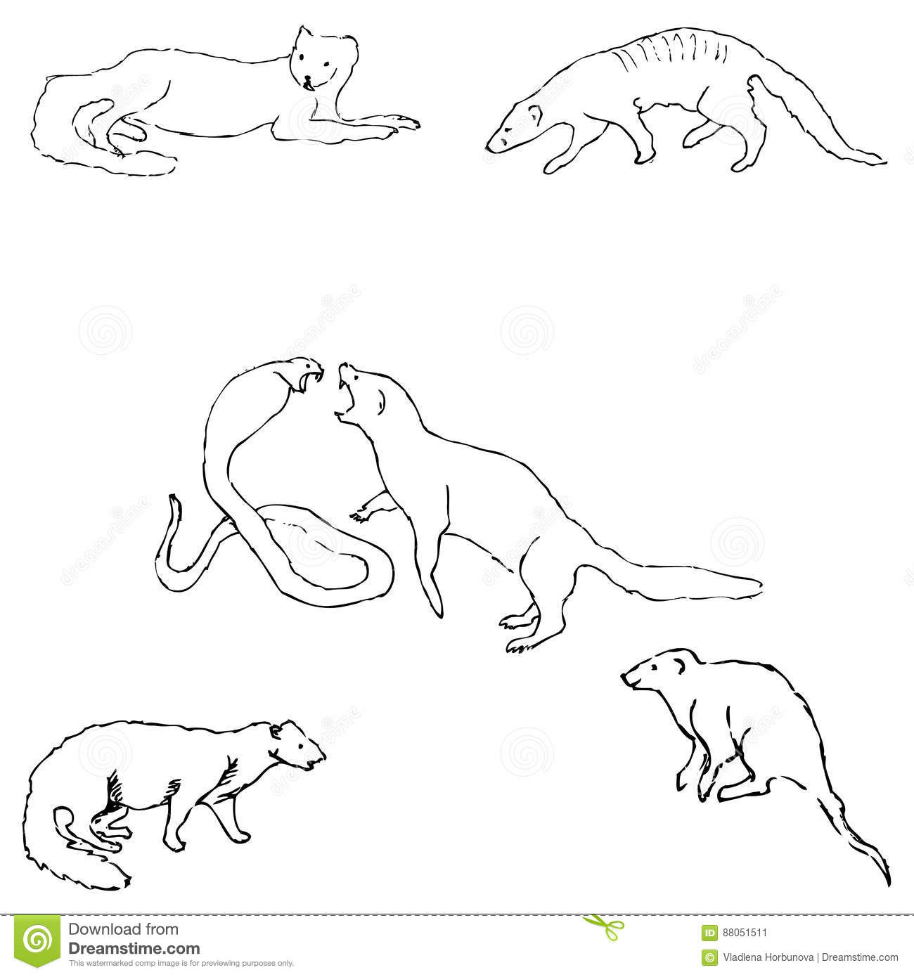 Mongoose sketch by hand pencil drawing by hand vector for Mongoose coloring page